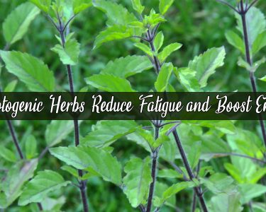Adaptogenic Herbs Reduce Fatigue and Boost Energy
