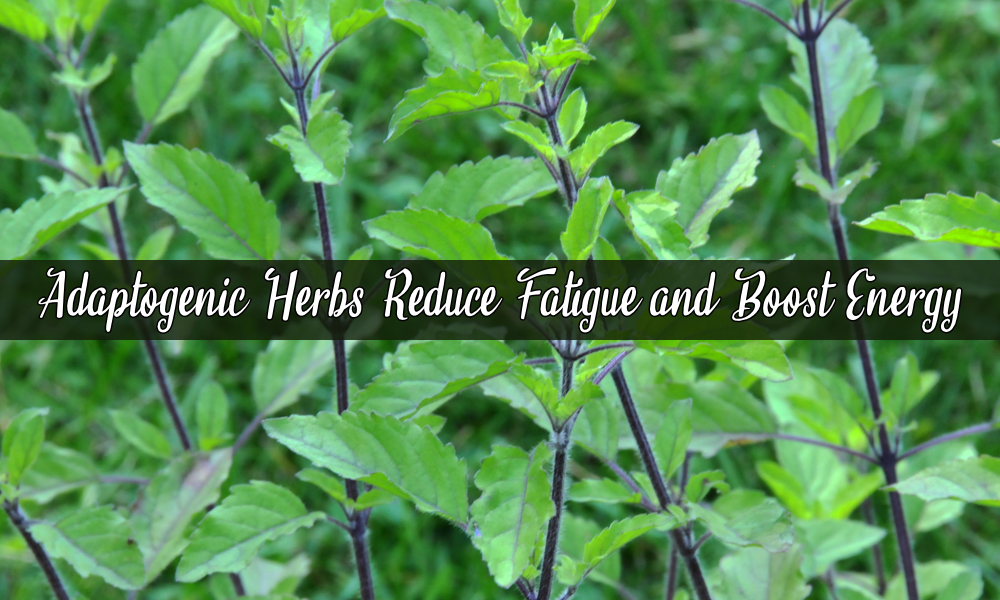 Best Adaptogenic Herbs That Reduce Fatigue & Boost Energy