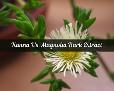 Kanna vs. Magnolia Bark Extract