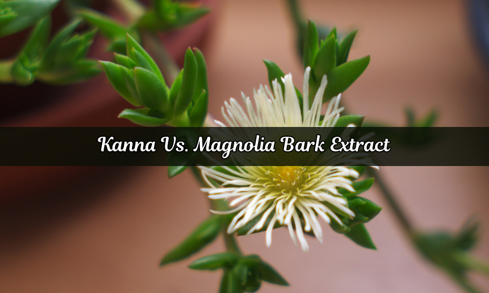 Kanna Vs. Magnolia Bark Extract (Honokiol & Magnolol)